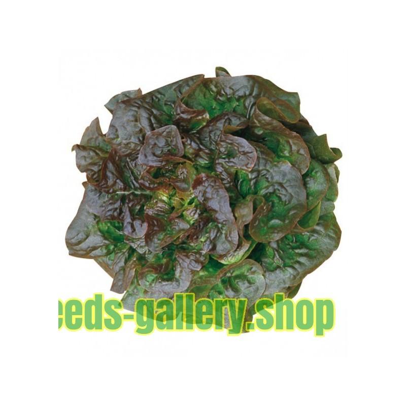 Kopfsalat Brune d´hiver Salat Saatgut Samen Sämereien