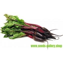 Kamus Leek Seeds – Allium Porrum