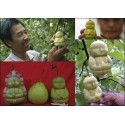 Fruit Mold in the form of Buddha, pear, Muskmelon…