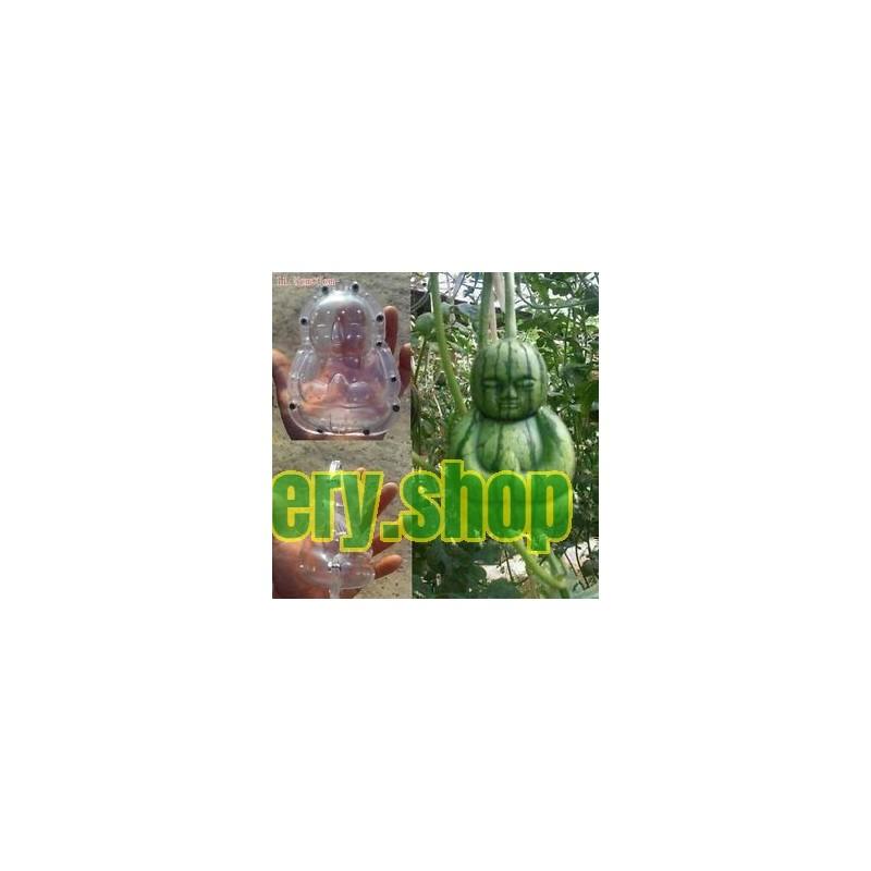 Graines de Pâquerette plante médicinale