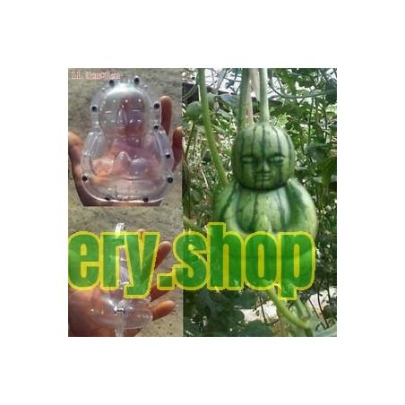Krasuljak, Belka Seme ukrasna i lekovita biljka