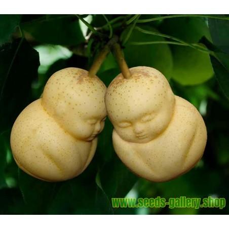 Die Form für Früchte in Form von Buddha, Birne, Zuckermelone...