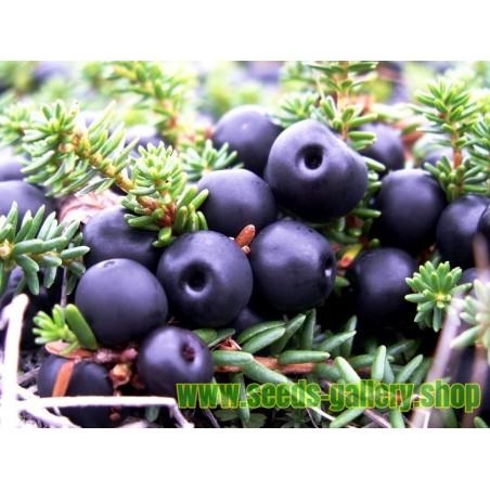 Crowberry, Black Crowberry Seeds (Empetrum nigrum)