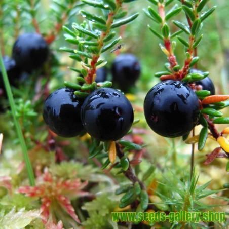 Jalapeno Early - Rani Chili Papricica Seme