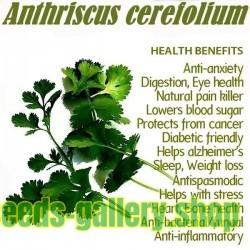 Semi di CERFOGLIO - Spezia e pianta medicinale (Anthriscus cerefolium)