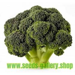 Brokkoli Samen 'Corvet' (Brassicaceae Brassica oleracea)