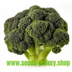 Broccoli - Sparriskål Corvet Frön