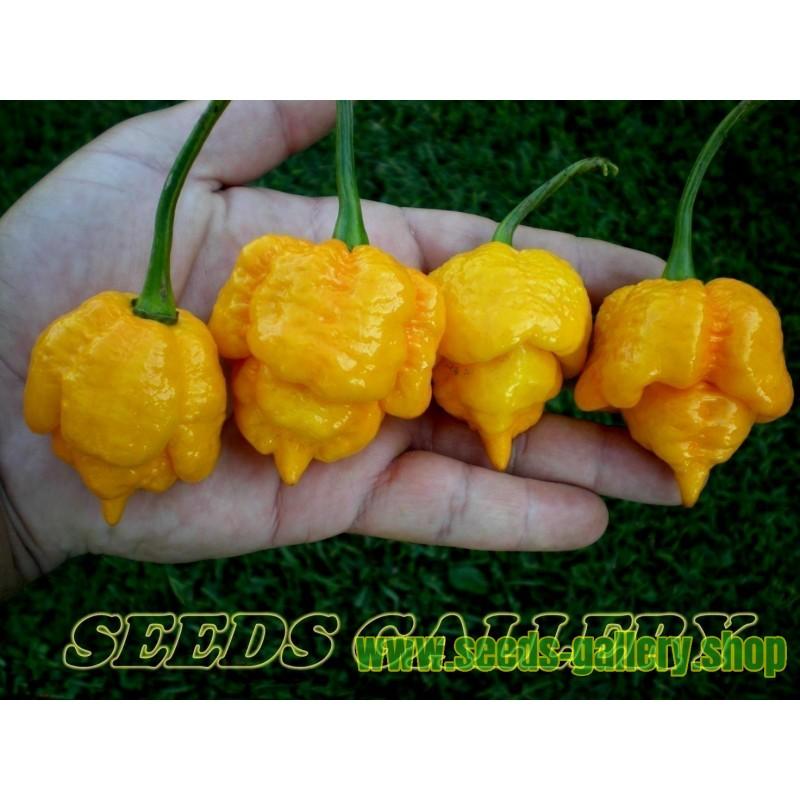Sementes Pimenta Trinidad Scorpion Morouga Amarelo