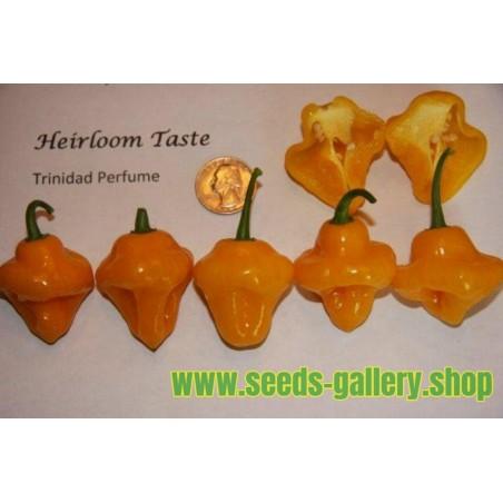 Semillas de Pimiento Chile aromatico Trinidad Perfume