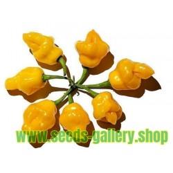 Trinidad Perfume - Chilifrö (Capsicum chinense)