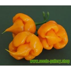Sementes De Pimenta Trinidad Scorpion CARDI – RARO