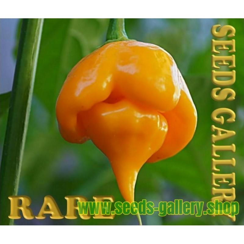 Trinidad Scorpion CARDI Seeds - RARE