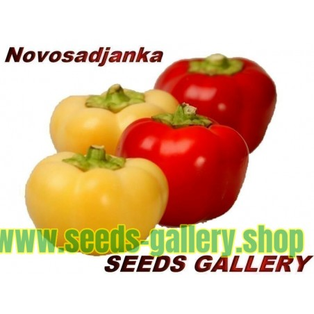Süßer Paprika Samen ''Novosadjanka''