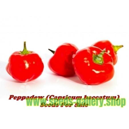 Sementes De Pimenta Africana Rara Pepperdew (Capsicum baccatum)