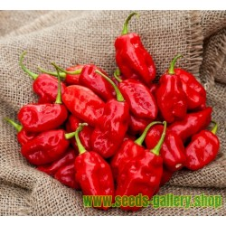 Habanero Zavory Red Chili Samen