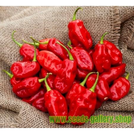 Zavory Habanero Hot Pepper Seeds
