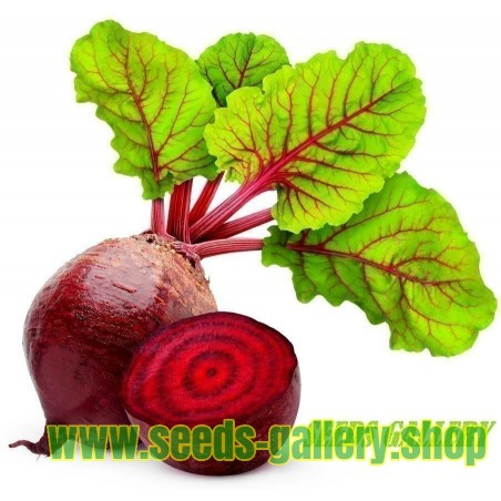 Beetroot 100 Seeds - Egyptian