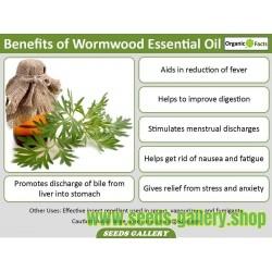 SWEET WORMWOOD, SWEET ANNIE, SWEET SAGEWORT Seeds (Artemisia annua)
