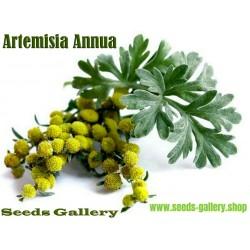 Sementes de DOCE ARTEMISIA -  Erva Medicinal (Artemisia annua)