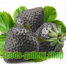 Μαύρο Φράουλα σπόροι - εξωτικά Σπάνιες