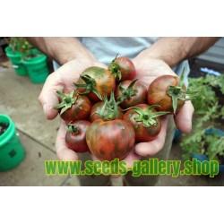Black Vernissage σπόροι ντομάτας