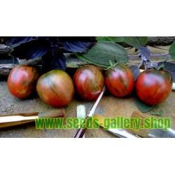 Semi di pomodoro nero di Vernissage
