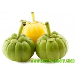 English yew - European yew Seeds (Taxus baccata)