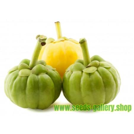 Garcinia Gummi-Gutta - Garcinia Cambogia Seeds