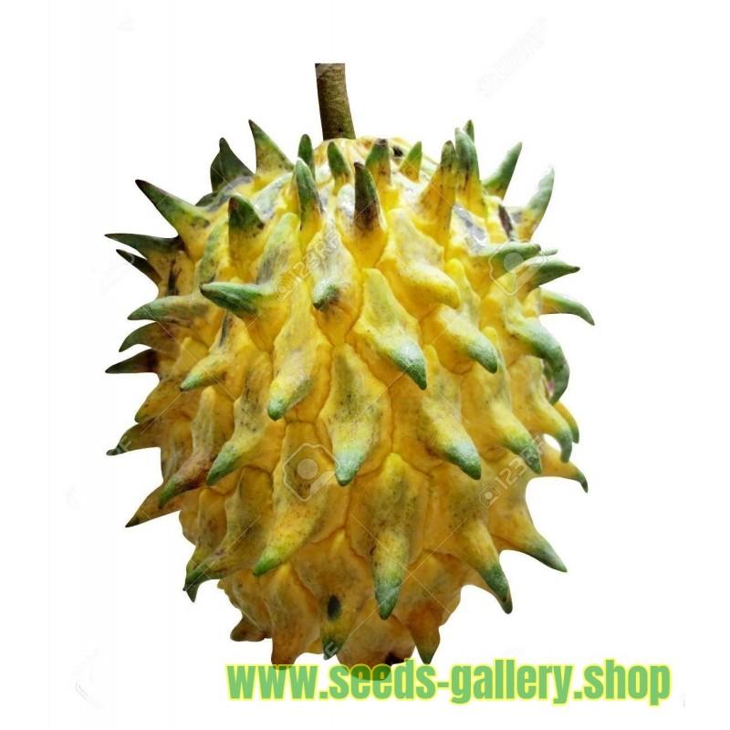 Semi di Biribá (Rollinia mucosa)