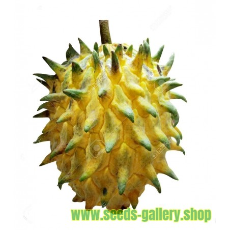 Biriba, Rollinia deliciosa, Samen