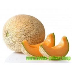 "Graines de ""Luxury"" Yubari King Melon"