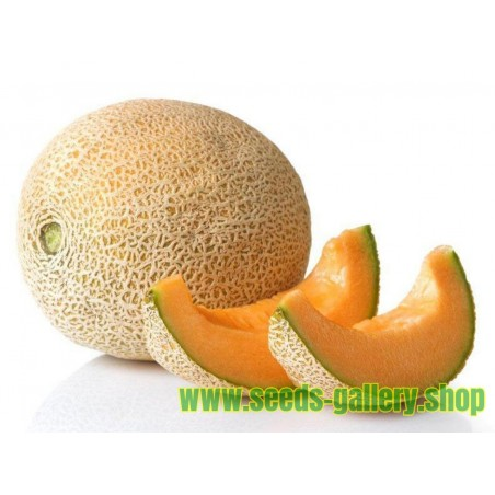 "Σπόροι ""Luxury"" Yubari King Melon"
