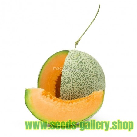 "Semillas de Rare ""Luxury"" Yubari King Melon"