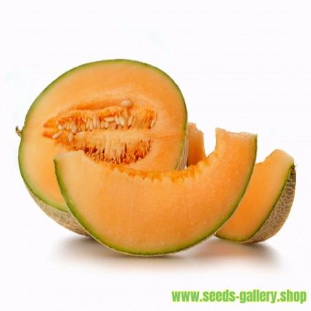 Yubari King Melon Seeds