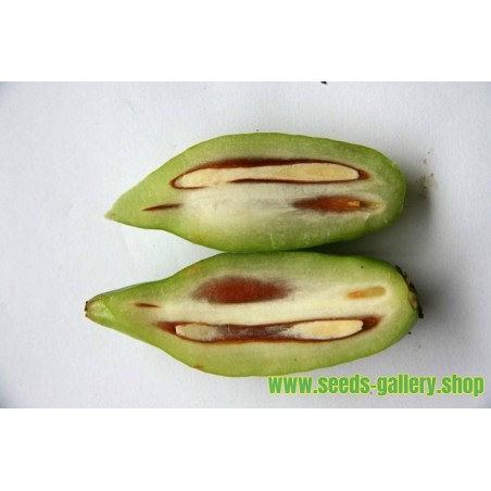 Semillas de AJO DE OSO (Allium ursinum)