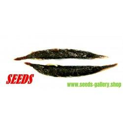 Garcinia schomburgkiana - Madan - Seme - vrlo retka biljka
