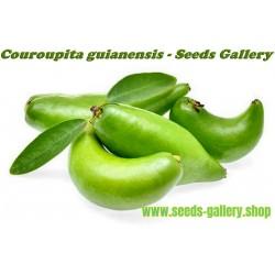 Σπόροι Madan - Garcinia schomburgkiana - πολύ σπάνια