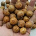 Wild Garlic, Bear's Garlic Seeds (Allium ursinum)