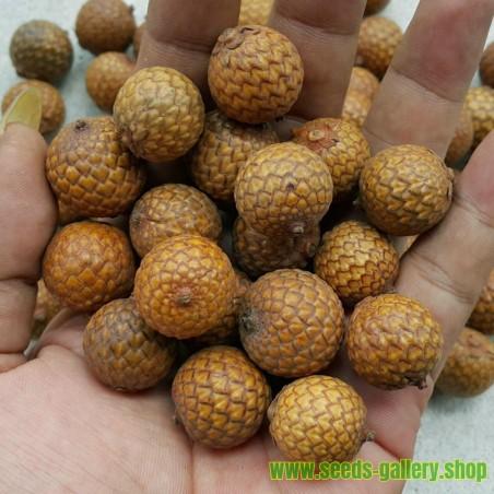 Medvedji Luk, Divlji Luk, Sremus Seme ( Allium ursinum)