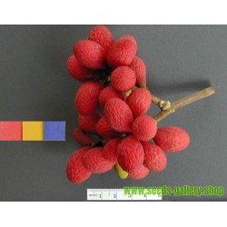 Semi di Korlan (Nephelium hypoleucum)