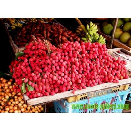 Semillas de tomate BALCÓN ESTRELLA