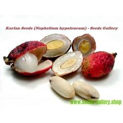 Σπόροι του Korlan (Nephelium hypoleucum)