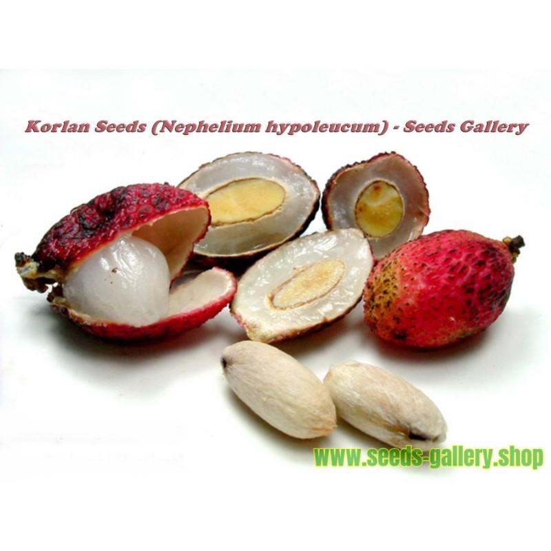 Korlan Seeds (Nephelium hypoleucum)