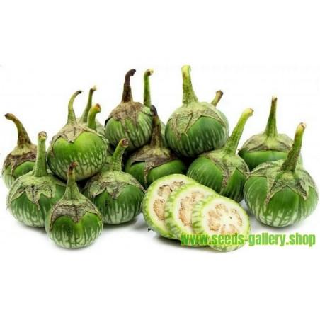 Thai Green Eggplant Seeds (Solanum melongena)