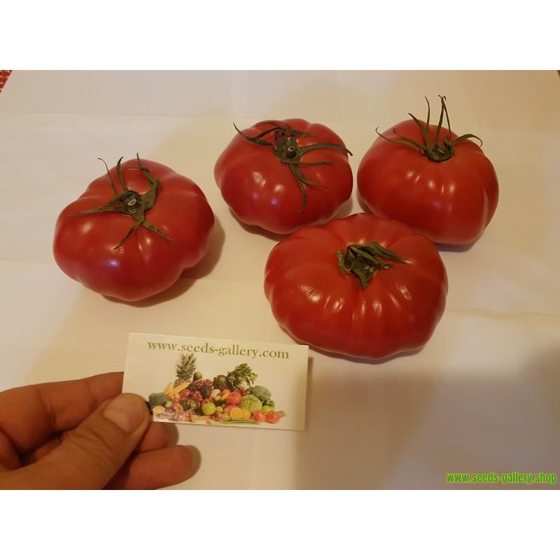 Graines de Basilic Ararat (ocimum basilicum)