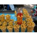 Peruvian Chullpi Corn - Maiz Seeds