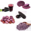 """Purple Corn - Maíz Morado """"Kculli"""" - Purple Maize Seeds"""