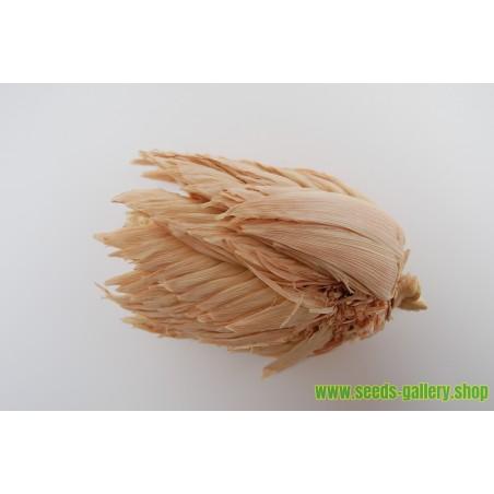 Pod Corn Seeds (Zea mays, var. tunicata)
