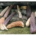 Semi di Riccio Zucca (Cucumis dipsaceus)