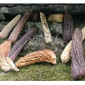 Teasel - Hedgehog Gourd Seeds (Cucumis dipsaceus)